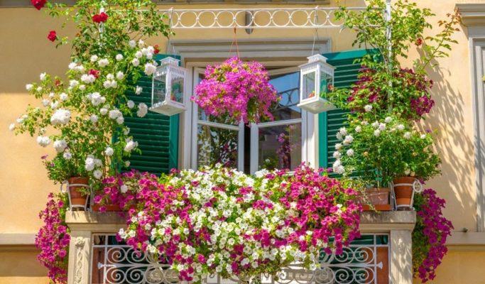 Hoa ban công sẽ khiến cho nhà bạn trở nên nổi nhất khu phố