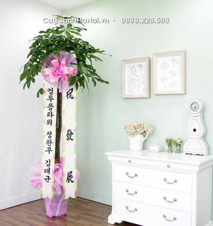 Hiện nay, cây cảnh làm quà tặng theo phong cách Hàn Quốc đã trở nên nở rộ