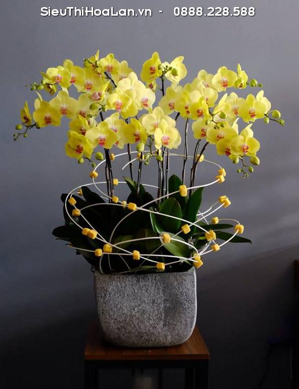 Hoa lan hồ điệp vàng ấp ủ trong nó sự ấm áp của tình thân.