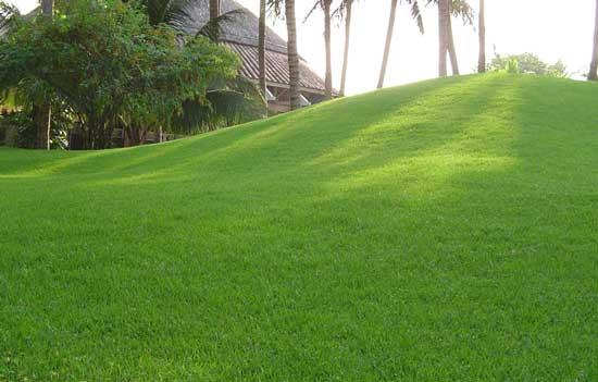 Màu sắc cỏ nhung tươi mát và đan thành thảm rất đẹp mắt